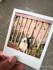Polaroid Emulsion Lifts
