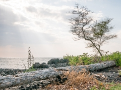 A-Bay, The Big Island, Hawaii, 2018.